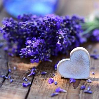 淡紫薰衣草儿