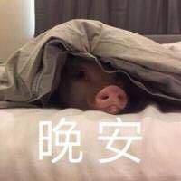 拉大手你好晚安
