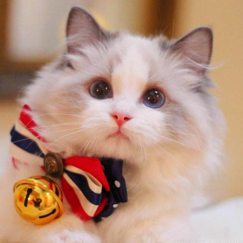 咪咪一只小肥猫