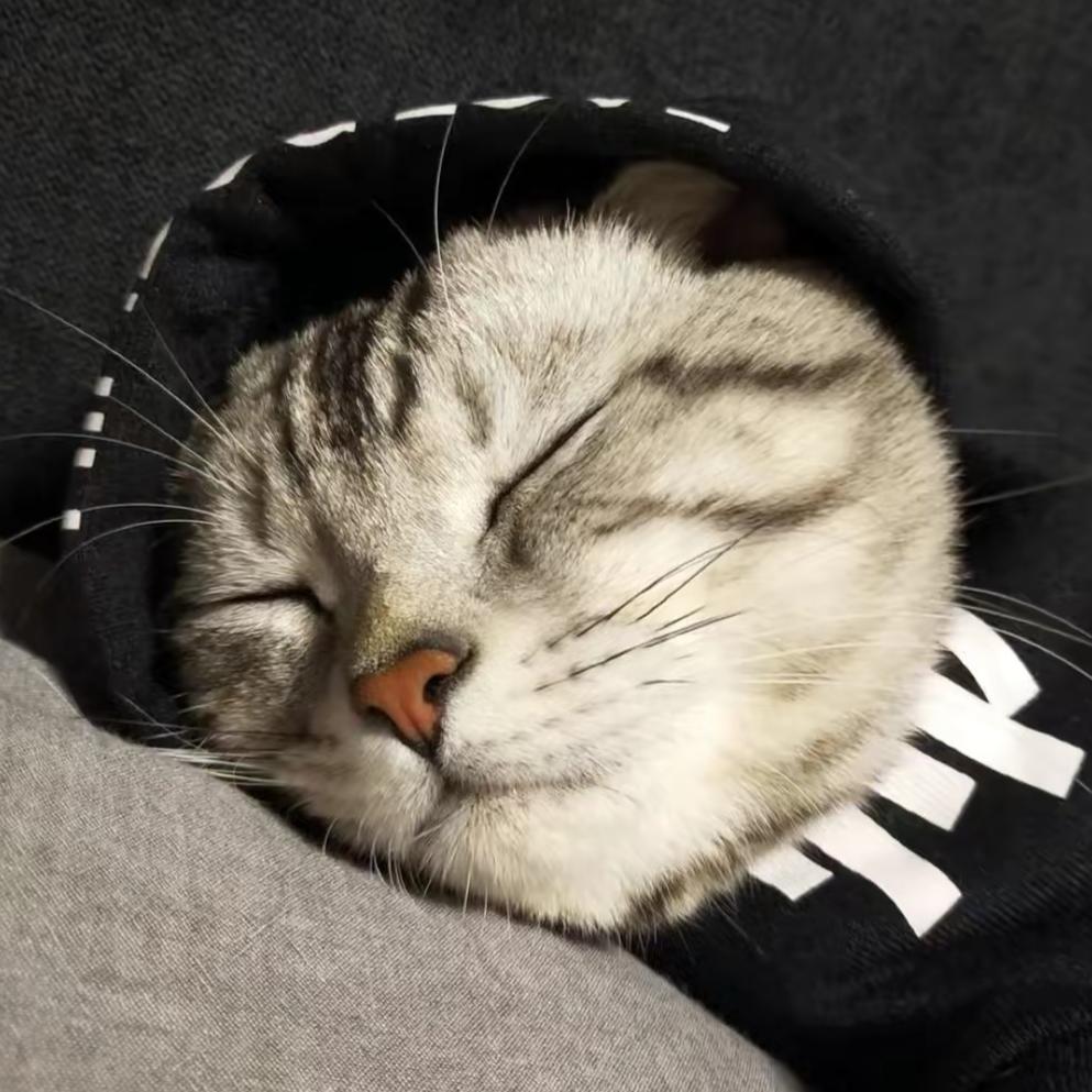 喵喵是只神经猫