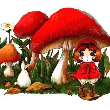 小蘑菇解说
