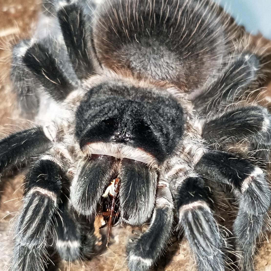 三只蜘蛛的成长故事