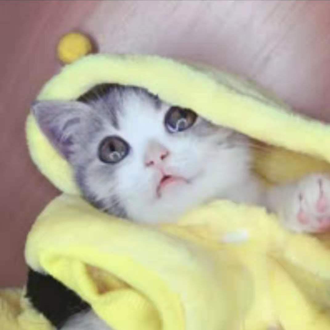 暴躁猫咪e梦酱