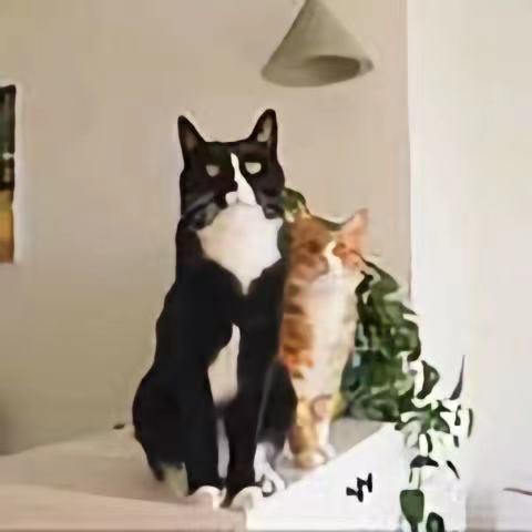 留小粒的猫